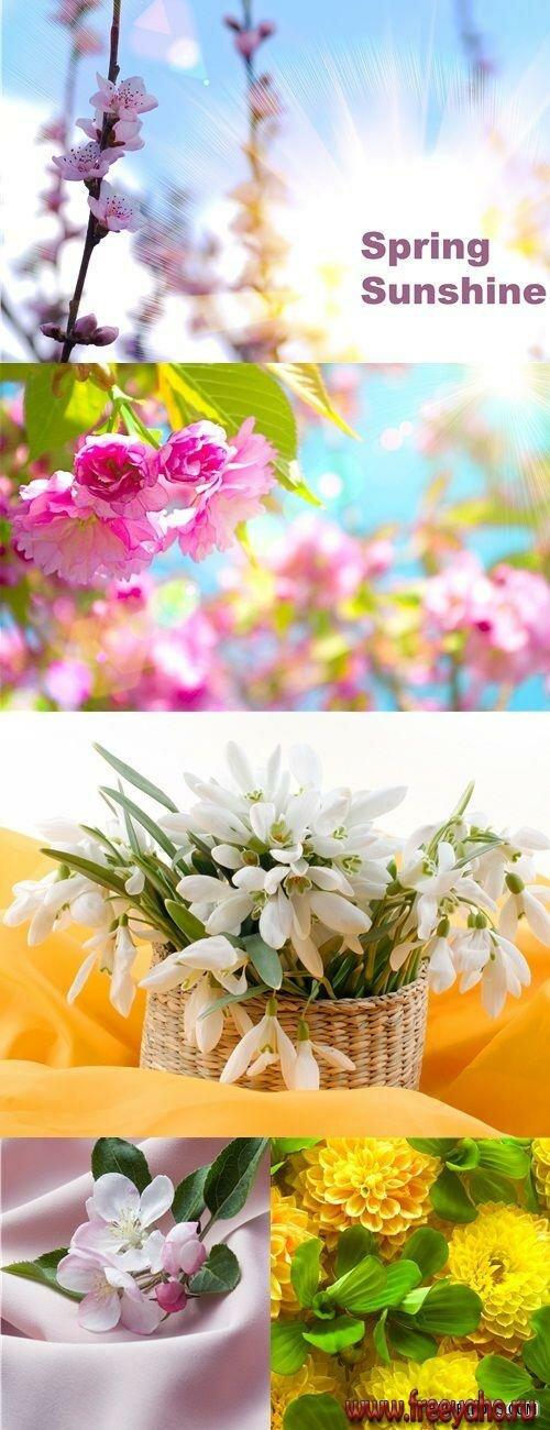 растровый клипарт цветы: