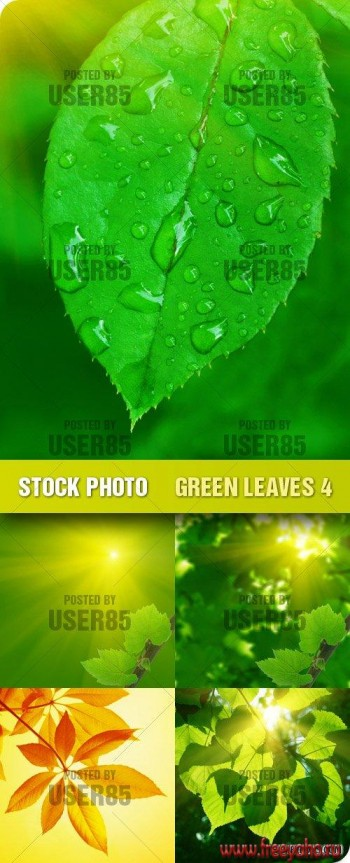 Зеленая листва | Stock Photo - Green Leaves 4