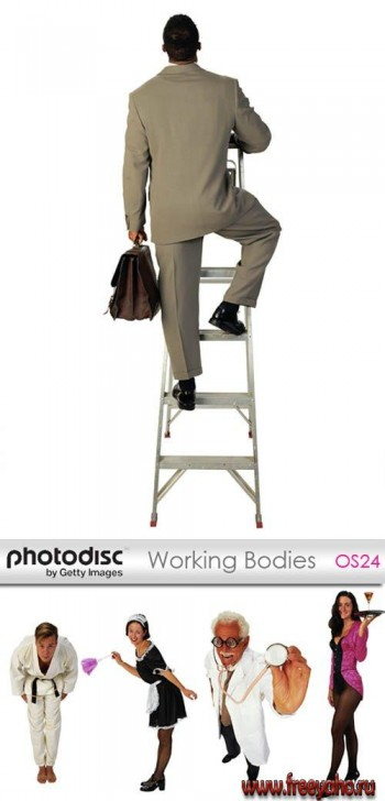 Working Bodies | ���������